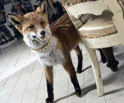 Shop-at-bluebird-fox