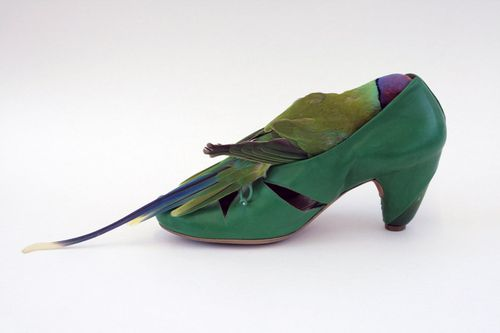 Nina Shoebird 15110jpg